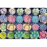 Kanzd 2020 Household Succulent Spectrum Plants 1000 Piece Adult Children Puzzle Pattern