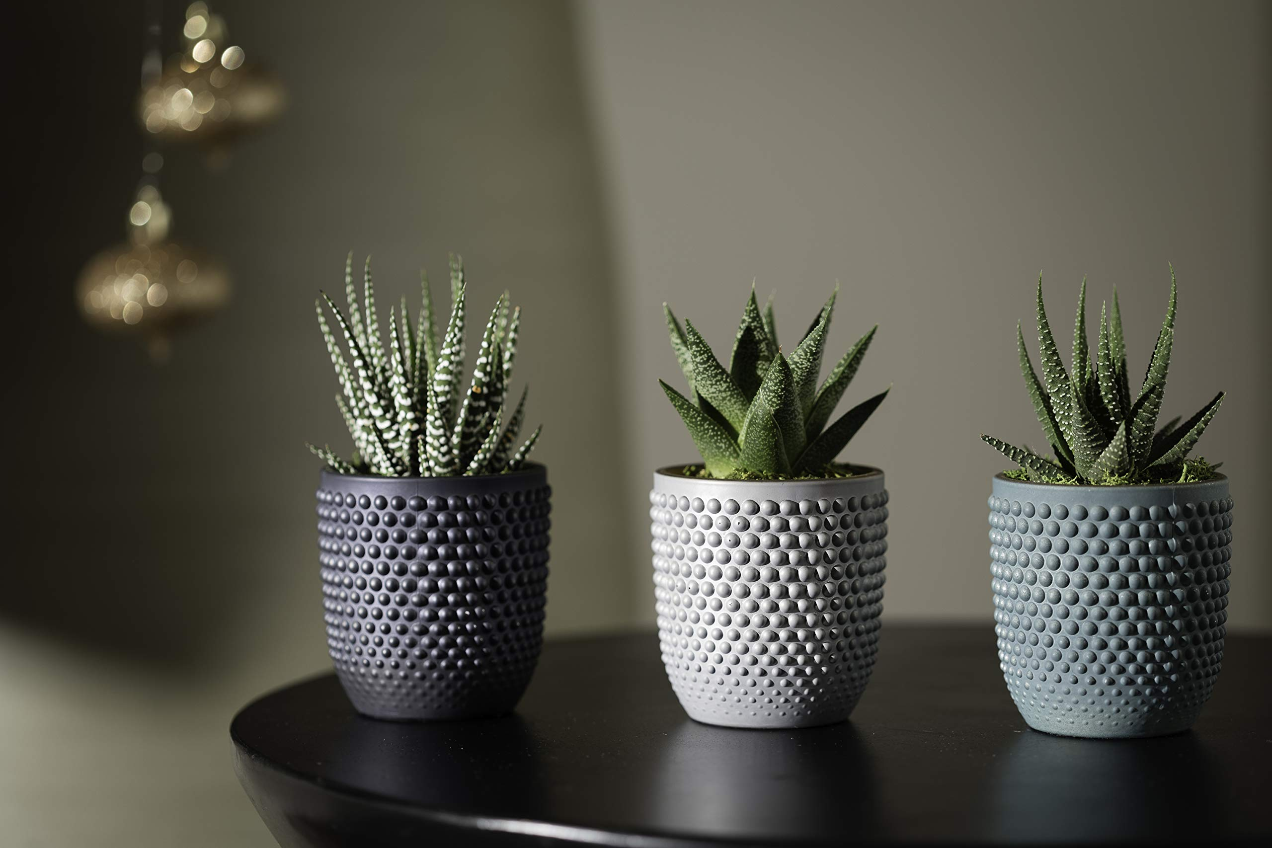 Live Succulents in Blue, Teal, and Grey Ceramic Containers Set of 3, From Hallmark Flowers