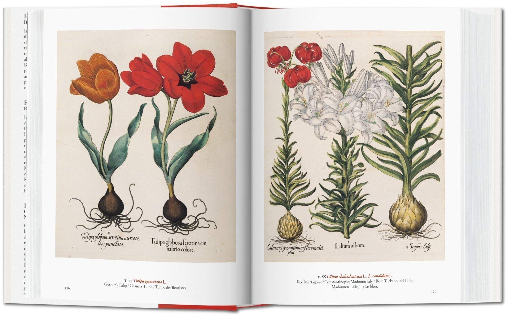 A Garden Eden Meisterwerke Der Botanischen Illustration Amazon Com Br