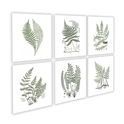 Amazon.com: Fern Art Print by Gnosis Picture Archive #Fern_Sage6B ...