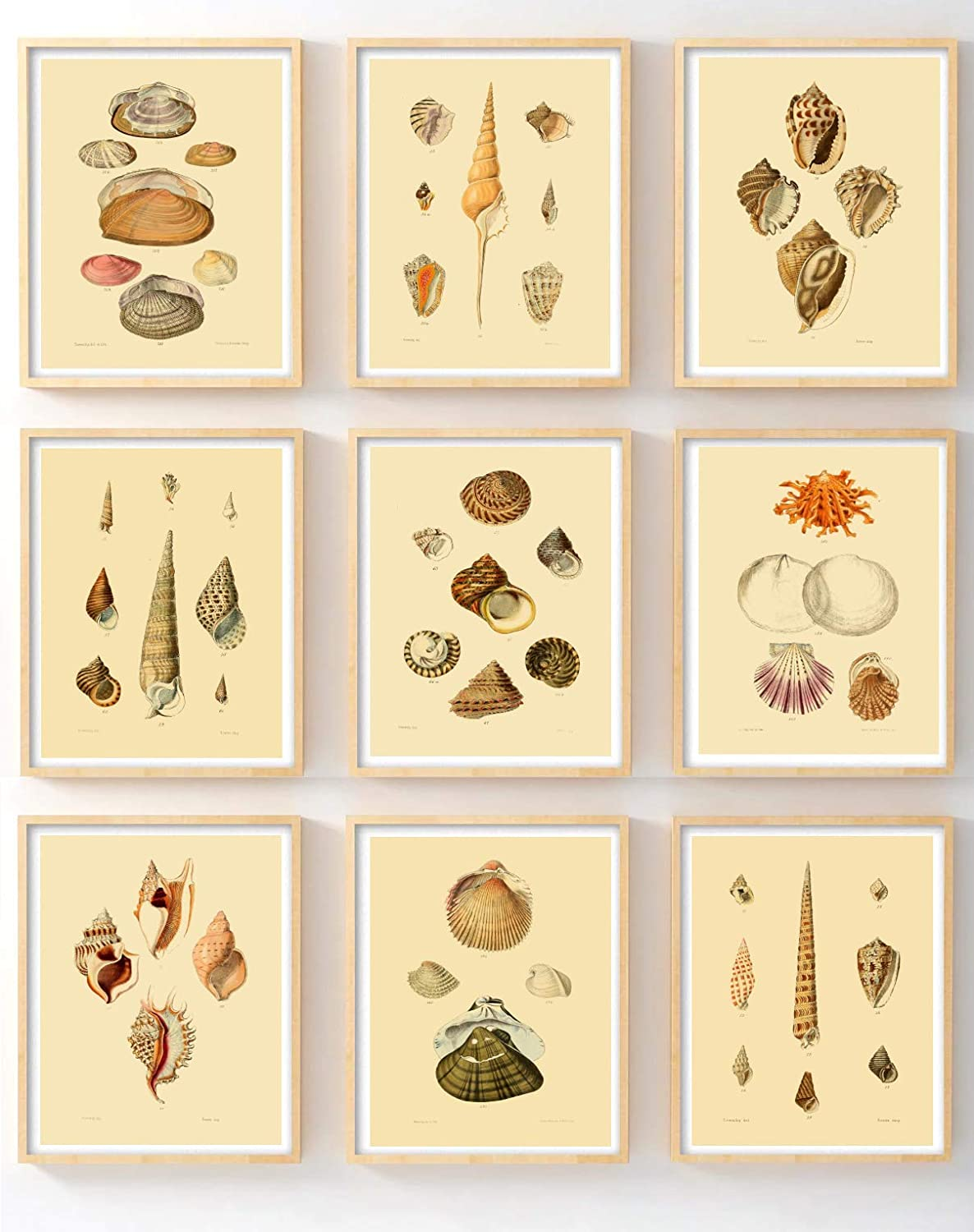 Amazon Com Ink Inc Vintage Sea Shell Beach Ocean Wall Art Prints Posters Set Of 9 5x7 Posters Prints