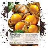 Package of 50 Seeds, Ground Cherry Tomatillo (Physalis pruinosa) Non-GMO Seeds By Seed Needs