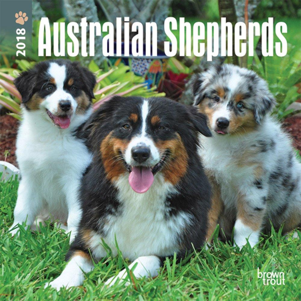 Australian Shepherds 2018 7 x 7 Inch Monthly Mini Wall Calendar, Animals Dog Breeds