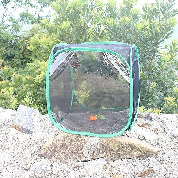 KUANDARM Respirable Insecto y Mariposa Hábitat Jaula Jardín de Mariposas Plegable Terrario Pop Up potenciar: Amazon.es: Deportes y aire libre