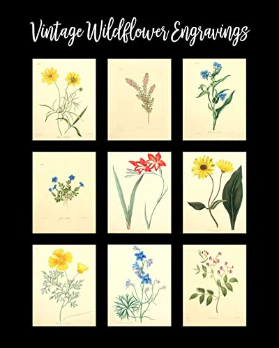 Wheat Vintage Botanical Floral Illustration Art Poster 24x36