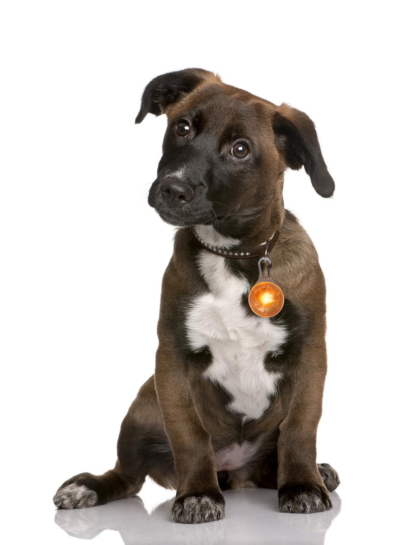 gatas arn/és para perros Collar Luminoso PRECORN Pendiente luminoso LED en naranja para perros