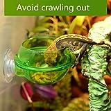 Zantec Ciotola antifuga,contenitore di cibi vivi per lucertola camaleonte rettile,Mangiatoia per lucertole