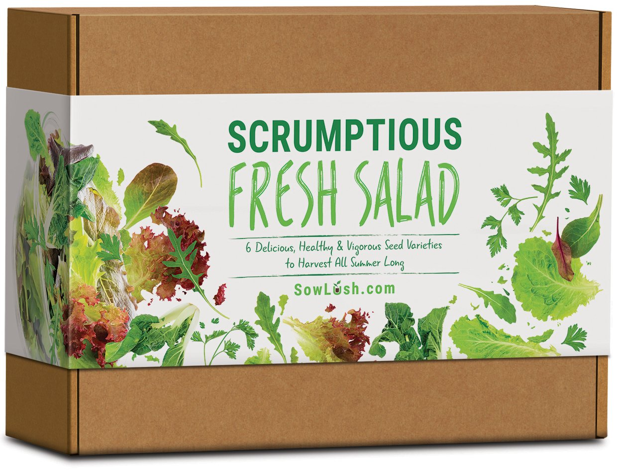Scrumptious Fresh Salad Gift Seed Kit. 6 Delicious, Grow Your Own Varieties to Harvest All Summer Long. Sow Lush