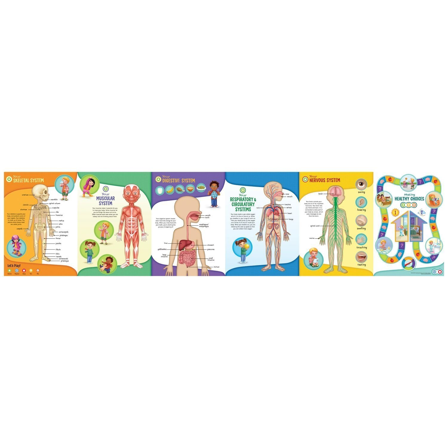 LeapFrog LeapReader Interactive Human Body Discovery Set (works with Tag) by LeapFrog (Image #8)