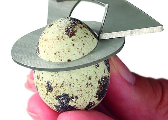 Compra Fackelmann Tijera Abrir Huevos de Codorniz, acero inoxidable, verde, 14, 5cm, 1 ud. en Amazon.es