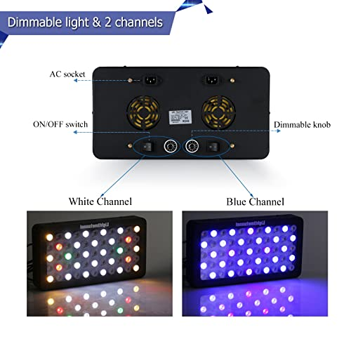 Dimmable light and two channels