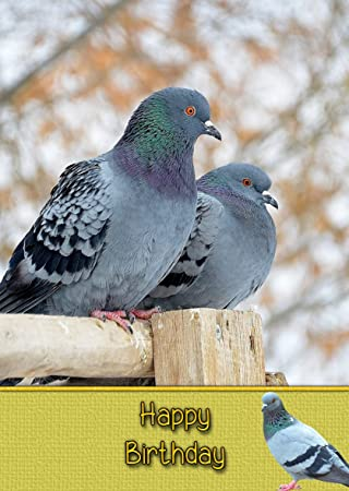 Racing Homing Pigeon Birthday Card 8x55 Mix Match On 8x55