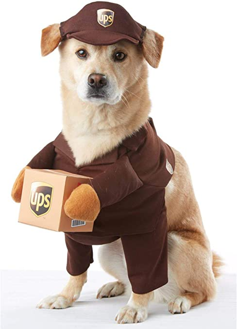 If Not Chocolate Lab Just a Dog Sweatshirt Pick Size Small to 5 X Large