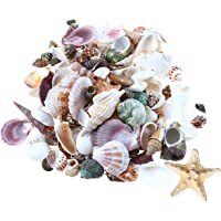 TOYANDONA 21pcs Mini Sea Shells Mixed Beach Seashells Sea Star Accents for Nautical Home Decoration Beach Theme Party…