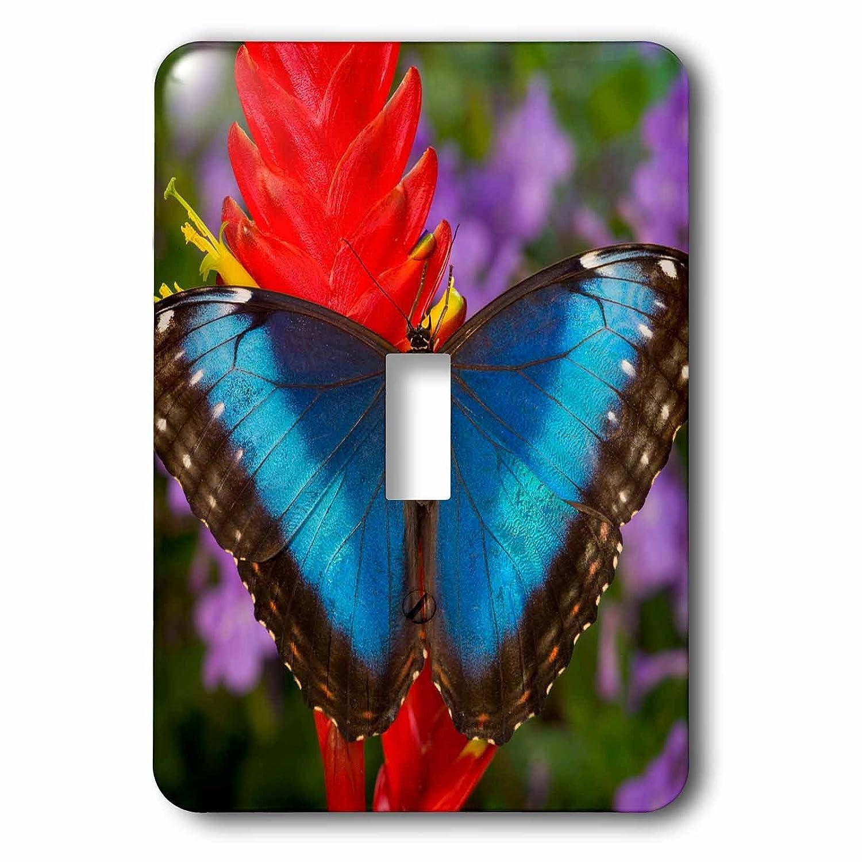 3drose Danita Delimont B07BHJZ5M9 – ハチドリ – トロピカルバタフライThe_ 1 Blue Morpho on Ginger Flower – 照明スイッチカバー – シングルトグルスイッチ(LSP 278011_ 1 ) B07BHJZ5M9, 岩崎本舗:f5e55272 --- bistrobla.se