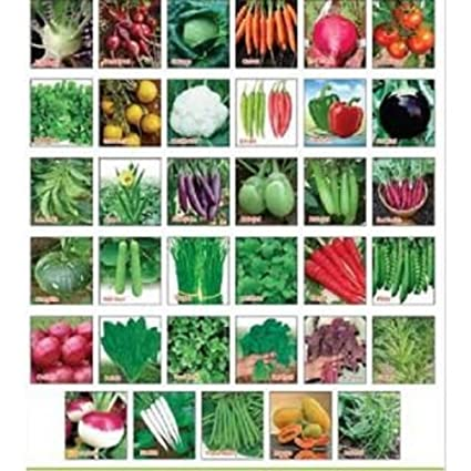 sapretailer combo pack of 30 vegetable seeds for terrace and