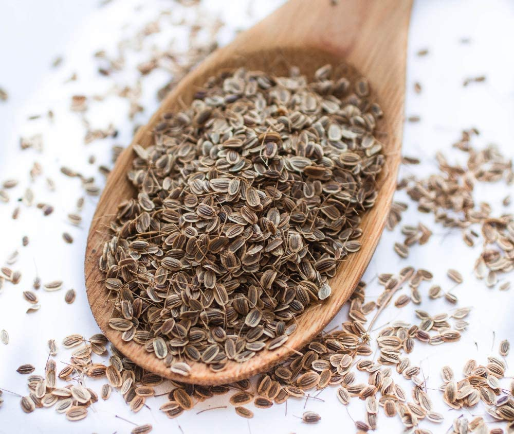 SAFLAX Avec substrat de culture aseptique 700 graines Anethum graveolens BIO Aneth