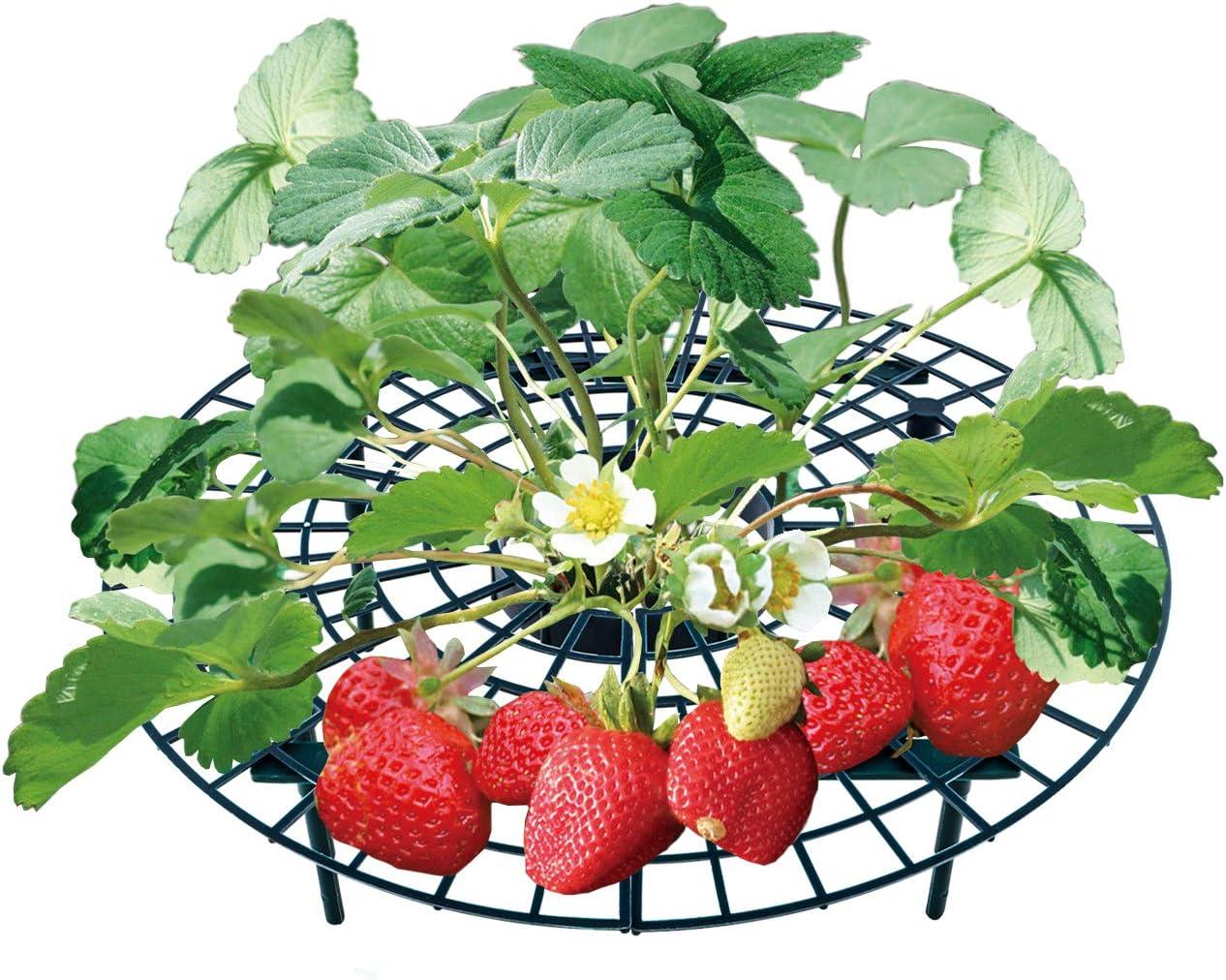 5 STK. Einstellbare St/ützen f/ür Erdbeeren Salat und Tomaten UPP Erdbeerreifer /& Fruchtreifer Schneckenschutz und Schutz vor F/äulnis und Schimmel