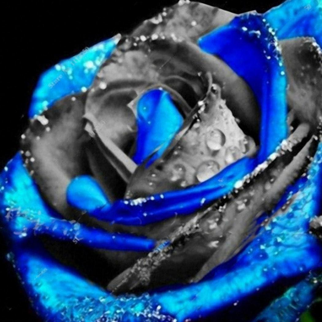 Lonlier Semillas Rosas 50 pcs Semillas Flores para Jardín Huerto