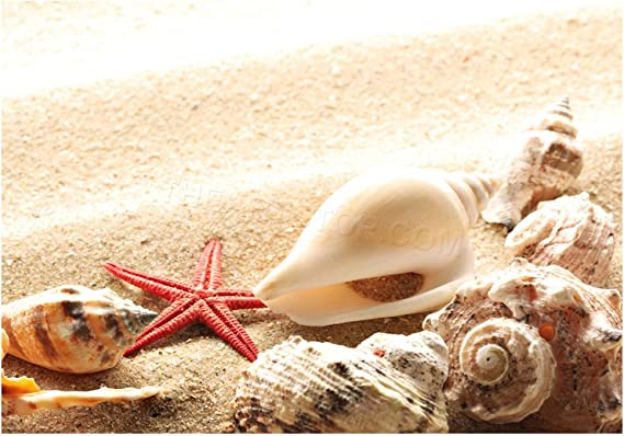 Poster poster starfish seashells 6082755
