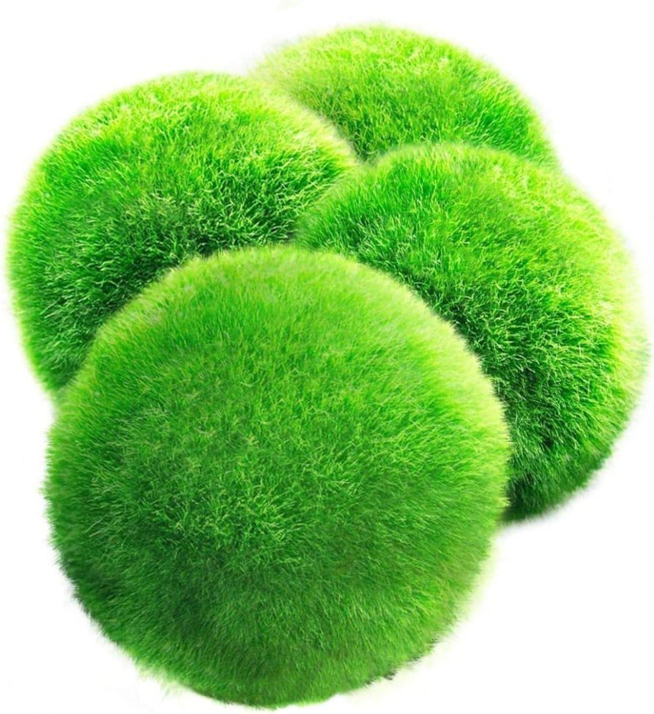 Luffy Giant Marimo Moss Balls, Pacchetto Jumbo Di Piante Esteticamente Belle, Crea Un Ambiente Sano, Palline Da Gioco Dal Vivo A Bassa Manutenzione, Gamberetti E Lumache Le Adoro, Confezione Da 4