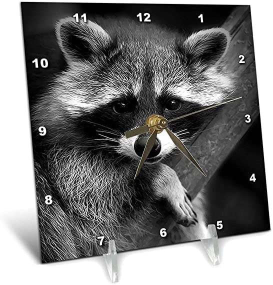 3dRose dc_173001_1 Baby Raccoon Black and White Digital Image-Desk Clock, 6 by 6-Inch
