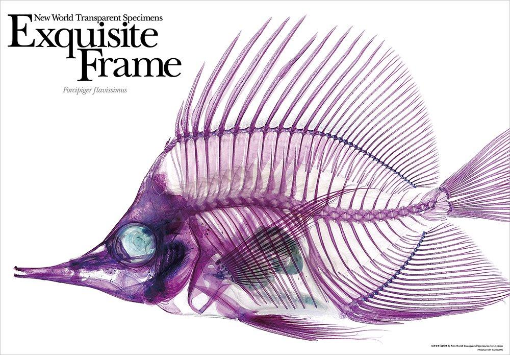 prisme de beaut? Art Nouveau Monde 'Les sp?cimens transparents' du squelette 108 pi?ces (butterflyfish long bec) 61-05 (japon importation) yanoman