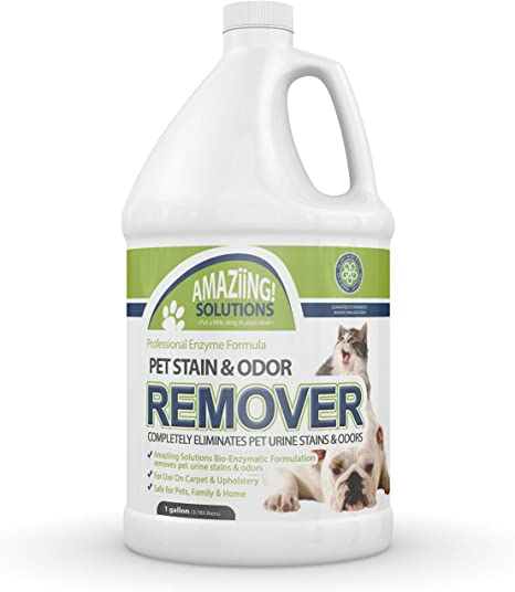 Amazon Com Amaziing Solutions Pet Odor Eliminator And Stain