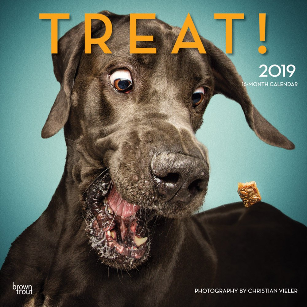 Treat 2019 12 X 12 Inch Monthly Square Wall Calendar By Hachette