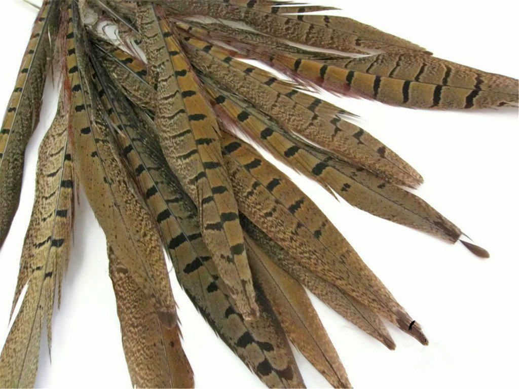 piume lunghezza fagiano coda 12-14 pollici 10,30,50 pezzi ERGEOB/® Piume piume di fagiano 30-35cm