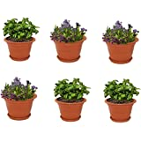 Meded Siti Plast Heavy Duty Plastic Planter Pots with Bottom Tray Color Terracotta (12 Inch, Pack of 6)