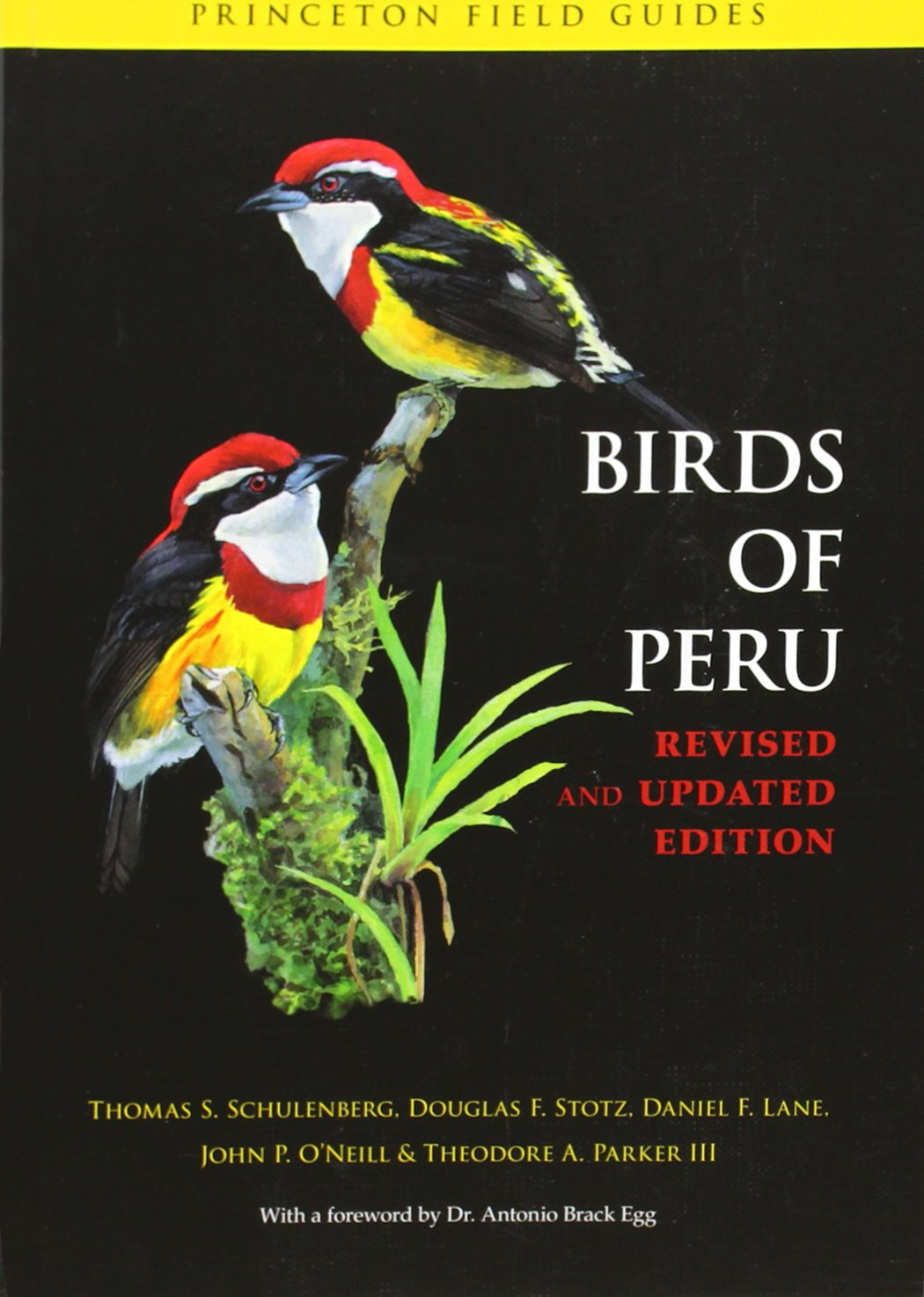 Read Online Birds of Peru: Revised and Updated Edition (Princeton Field Guides) pdf