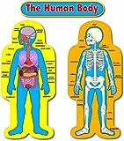 Carson Dellosa Child-Size Human Body Bulletin Board Set (3215)
