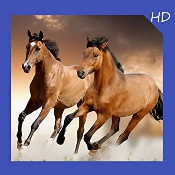 Amazon Com Horse Wallpaper Hd Free Appstore For Android