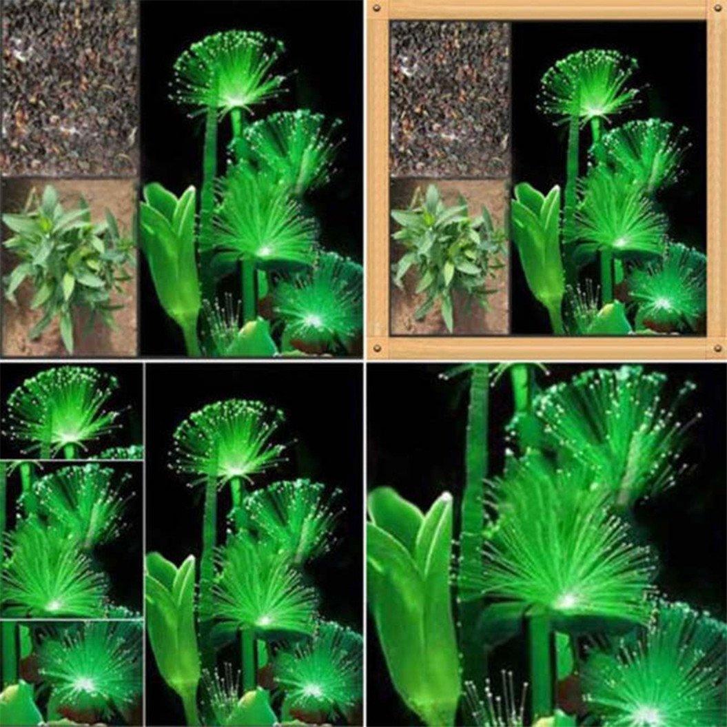 meizu88 100Pcs Rare Emerald Fluorescent Flower Seeds Night Light Emitting Plants Garden