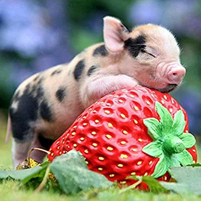 Yeefant Little Pet Pig with Strawberry Art Embroidery Paintings No Fading 5D Canvas Rhinestone Pasted Pasted DIY Diamond Cross Stitch Home Wall Decor for Bedroom Living Room,12x12 Inch: Toys & Games [5Bkhe1004513]