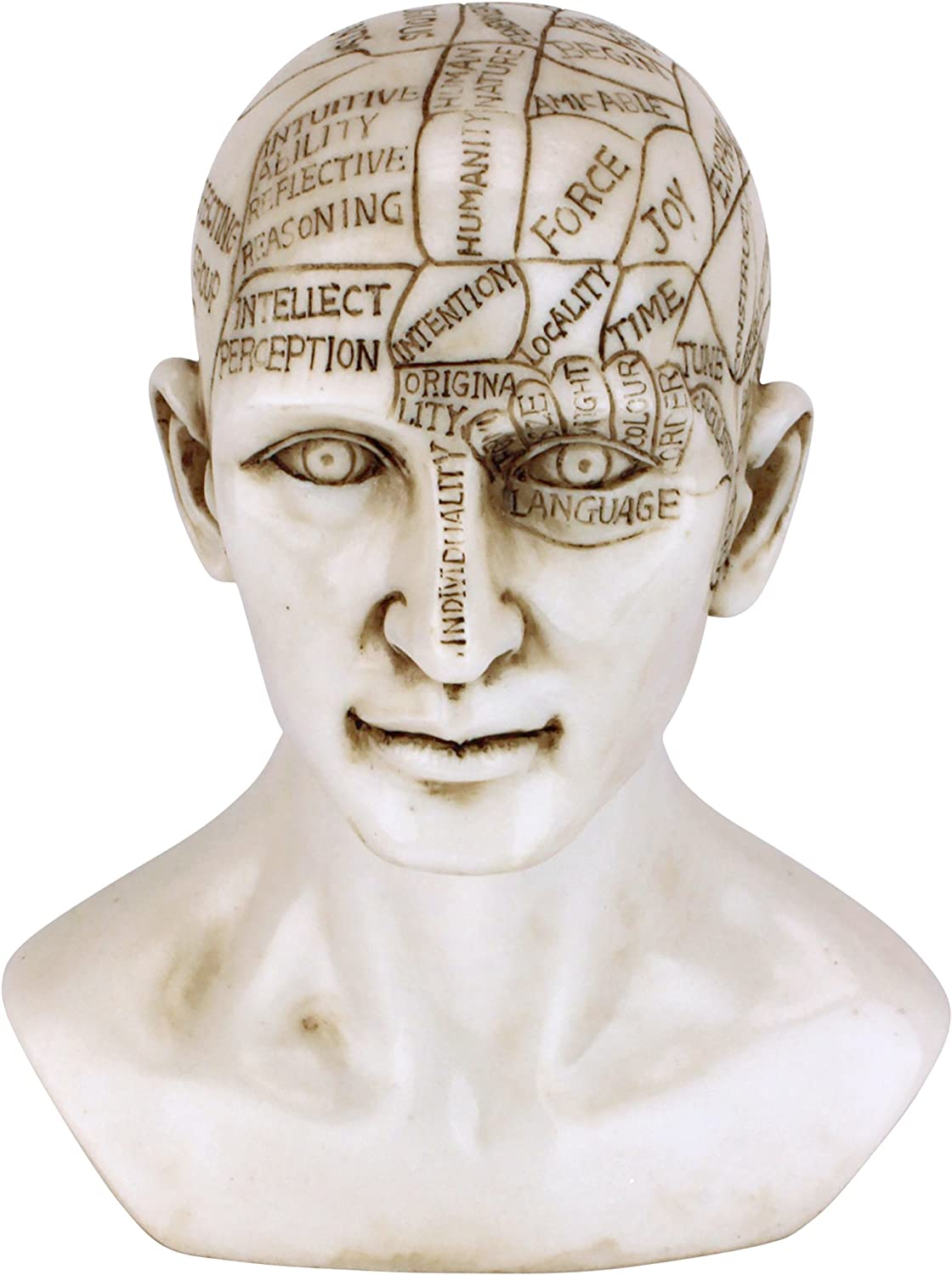 Design Toscano Phrenology The Science of The Brain Victorian Replica Statue, Ancient Ivory