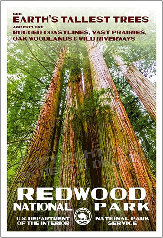 Amazon Com Redwood National Park Poster Original Artwork 13 X 19 By Rob Decker Wpa Style Posters Prints