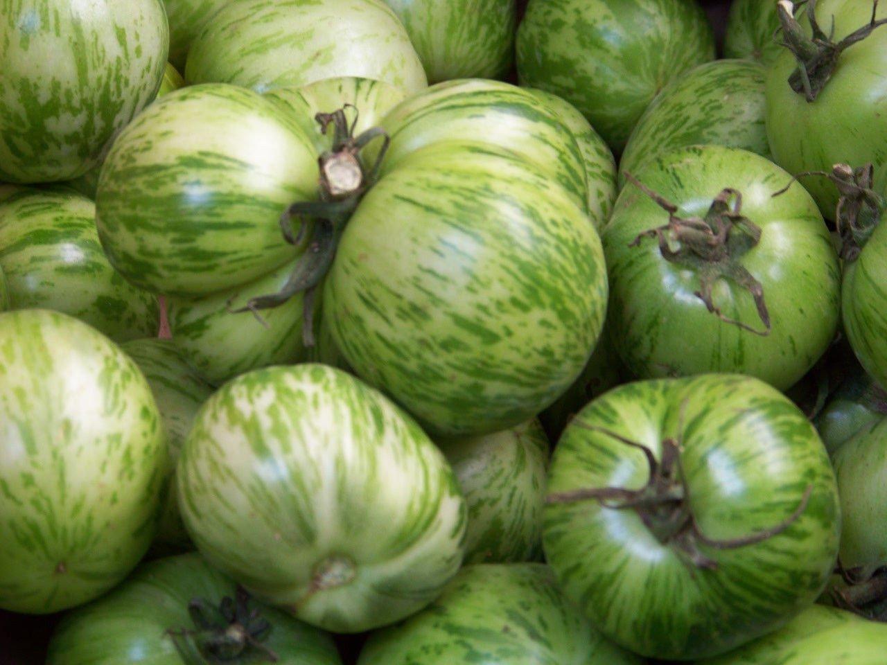 AGROBITS Tomate, verde cebra, de la herencia 50 semillas ...