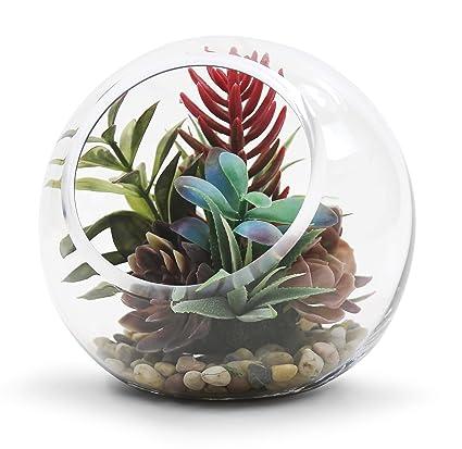 Amazon Com 8 Plant Terrarium Slant Cut Bubble Bowl With Wgv