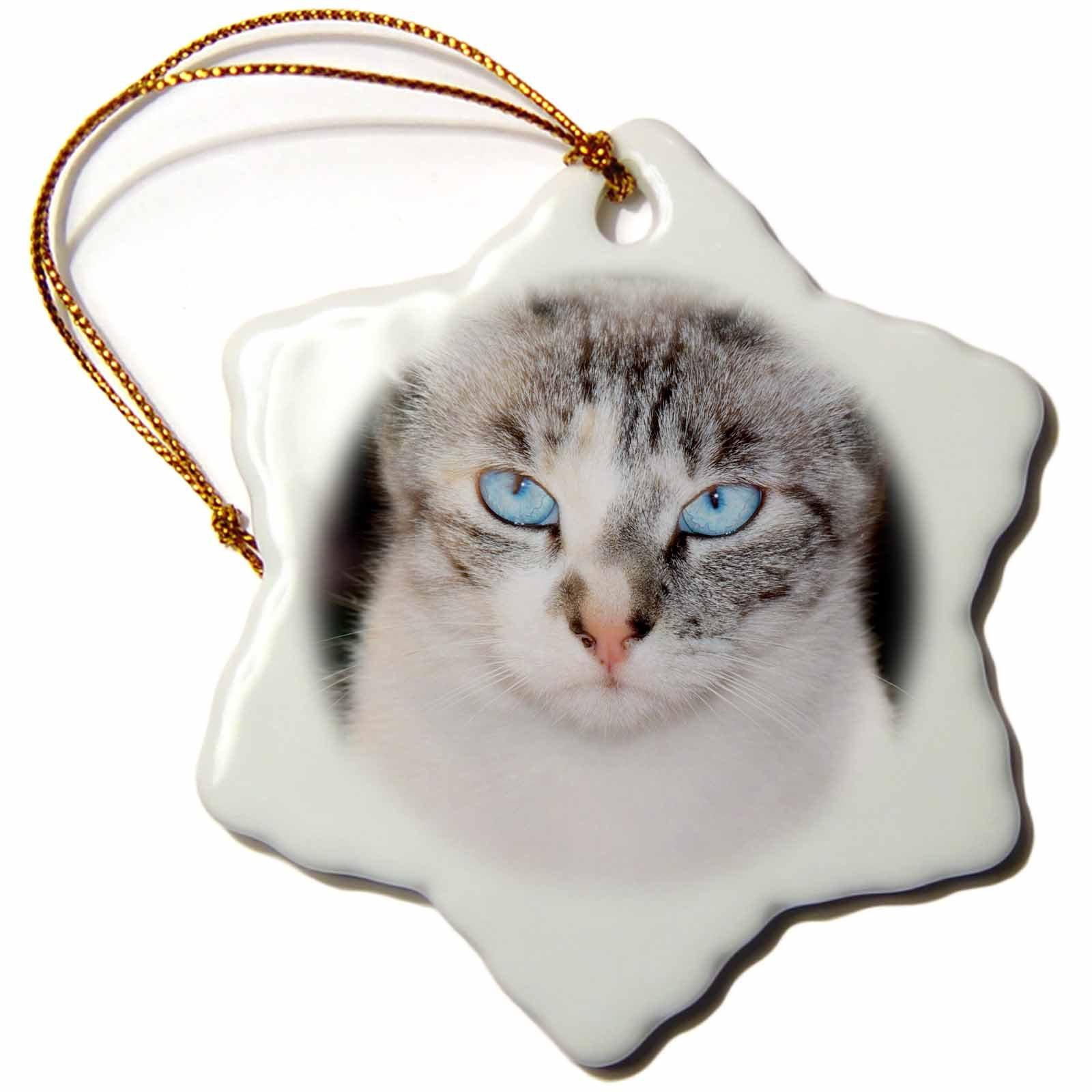 3dRose USA, California. Lynx Point Siamese cat Portrait Snowflake Ornament,
