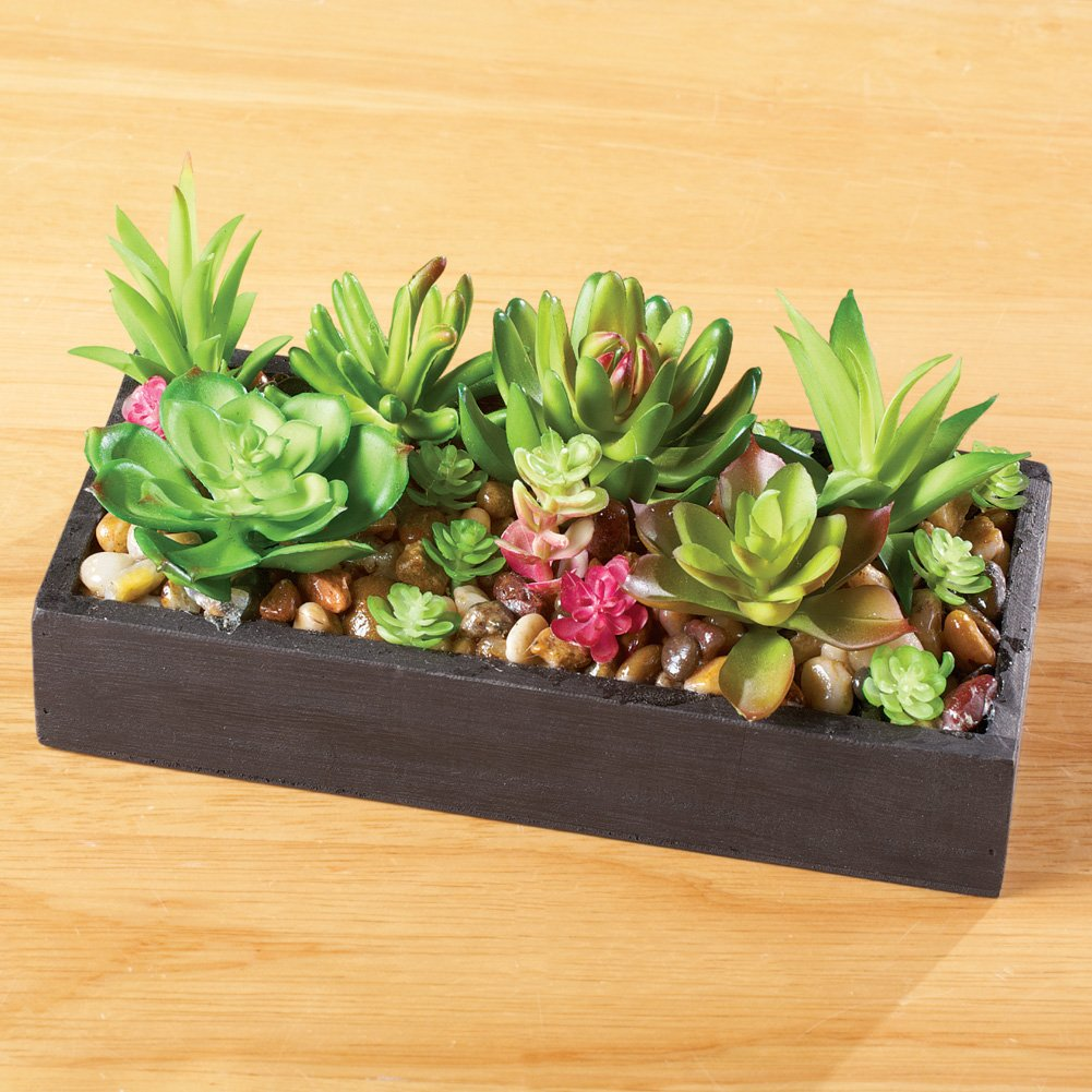 Amazon.com: Faux Succulent Garden with Tray, Black: Home & Kitchen