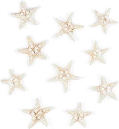 Starfish Small White Knobby Starfish bulk shells- set of 10 Beach Wedding Seashell Bulk Craft Starfish Bulk Craft Beach Decor