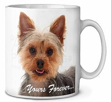 Yorkshire Terrier Hund Yours Forever Kaffeetasse Geburtstag