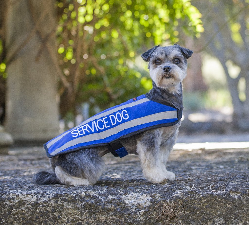 SERVICE DOG M-L Do Not Disturb//Dog Is Working Blue Colour Coded S M L Reflective Waterproof Fleece Lined Warm Dog Coats PREVENTS Accidents By Warning Others Of Your Dog In Advance