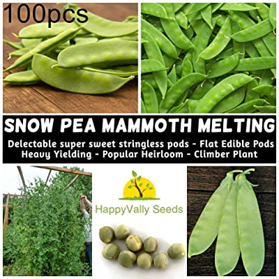 Pcongreat 100Pcs Sugar Snap Snow Pea Seeds Mangetout Edible Vegetable Plant Seeds for Planting, Ideal Outdoor Garden Plant : Garden & Outdoor
