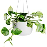 OMYSA Hanging Planter 8 inch (White) - Ceramic Hanging Pots for Plants - Ceiling & Wall - Flower Pot Outdoor & Indoor Hanging