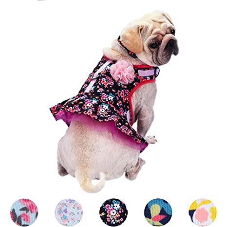 Amazon.com : Blueberry Pet 5 Patterns Soft & Comfy Spring Made Well