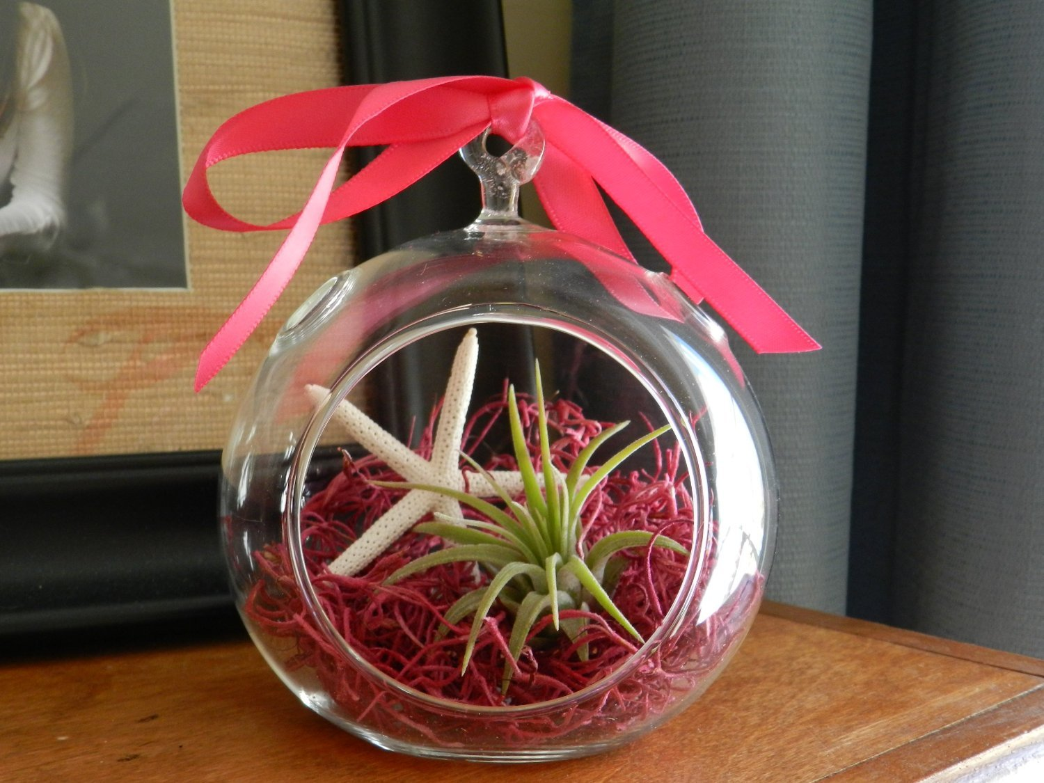 Amazon hinterland trading valentines day gift air plant amazon hinterland trading valentines day gift air plant tillandsia starfish glass hanging terrarium beautiful houseplant garden outdoor negle Choice Image