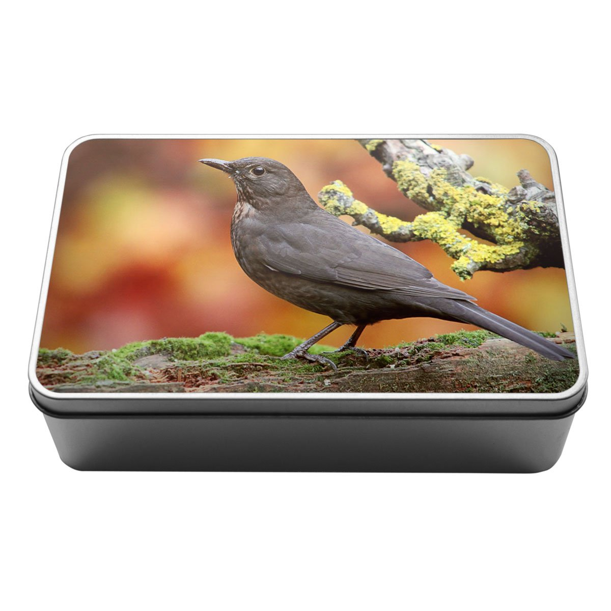 Blackbird Animal Metal Storage Tin Box 040 Duke Gifts